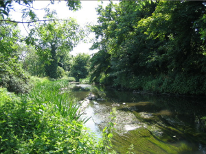 The River Crane at Whitton